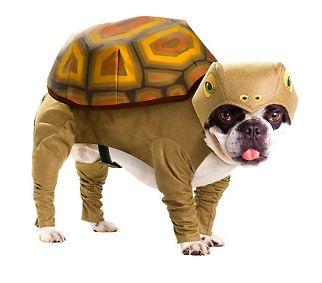 Turtle Dog