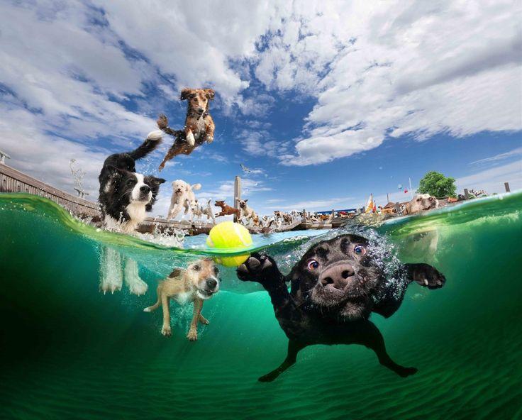 Seeth Casteel: perros bajo el agua. | senderismo con mi perro