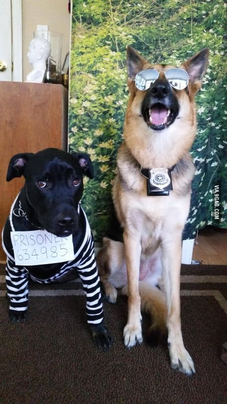 I like how their facial expressions match their costumes pretty well.