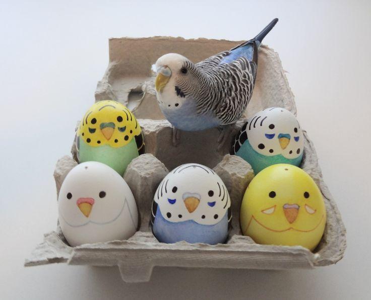 Lindos ovos com carinhas de periquitos!