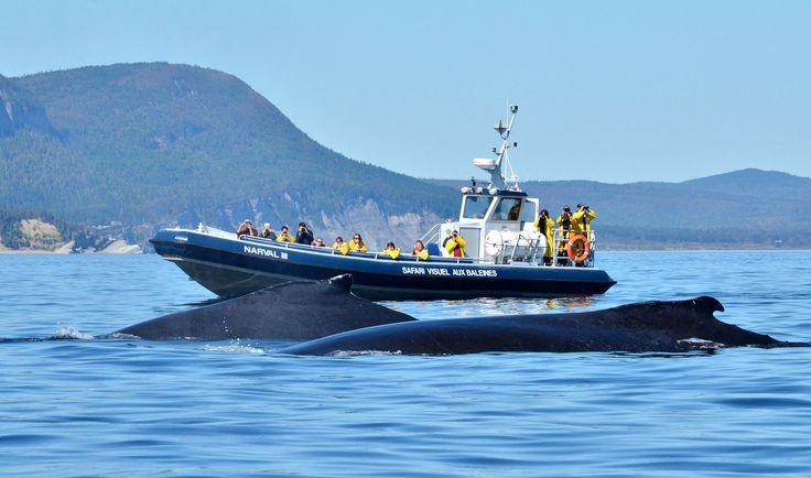 Excursions en mer. Photo : Marc Loiselle, Le Québec maritme.