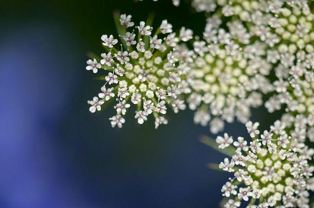 Lens Perspectives يا ورده في كل الفصول Flowers Photo Art Plants