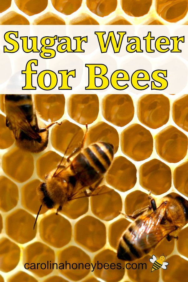 Feeding Bees Sugar Water How Why Carolina Honeybees In 2020 Sugar Water For Bees Feeding Bees Water For Bees