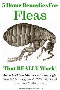 best 25 home remedies fleas ideas on pinterest flea remedies dog flea treatment and natural. Black Bedroom Furniture Sets. Home Design Ideas