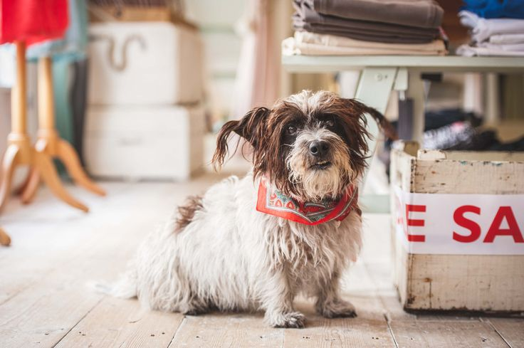 Dog Blog: Life on the Fashion Shop Floor by the brilliant @kjphotograph  #locallife #Haslemere
