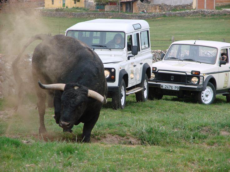 Visitando la ganadería