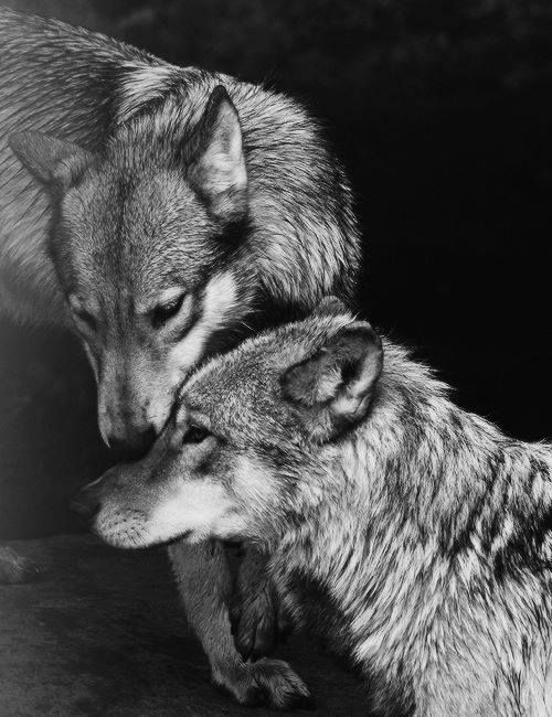 Simply-a-patient-wolf and Naughty-spice
