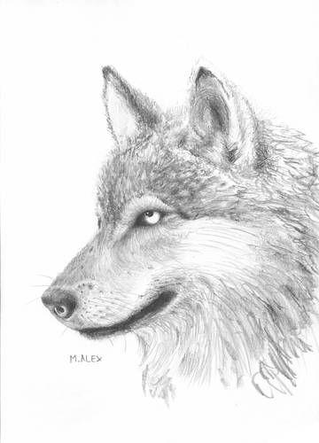 rysunki ołówkiem wilków - Szukaj w Google