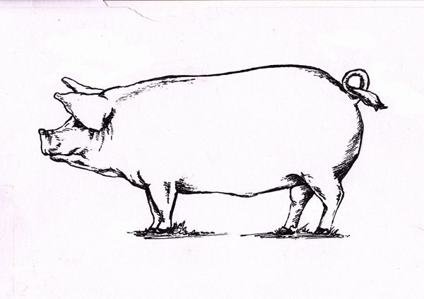 "Bearings' ""Pork Cuts 101"" Illustration and Design by Russell Shaw, Graphic Designer, Atlanta, GA"