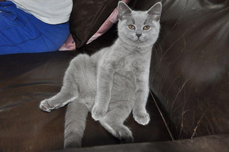 Kitty Chanel