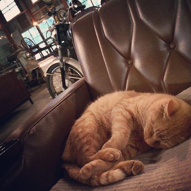 ☄ 連休中日は風の強い雨日 ニャンズ達も今日は外に遊びに行けません 明日 9日(月)は祝日ですのでOPEN  #ネコ #ねこ #猫 #cafe #カフェ #catstagram #cats #catsofinstagram #ねこ部 #ねこすたぐらむ #ネコ部 #ネコカフェ #ニャンズ #ニャンスタグラム #antiquecaferoad #アンティークカフェロード #掛川 #掛川市 #きじとら #キジトラ #ベンガル #掛川カフェ