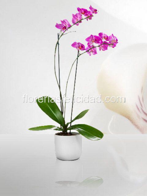 7 best arreglos florales para hombres flores a domicilio for Plantas decorativas para interiores