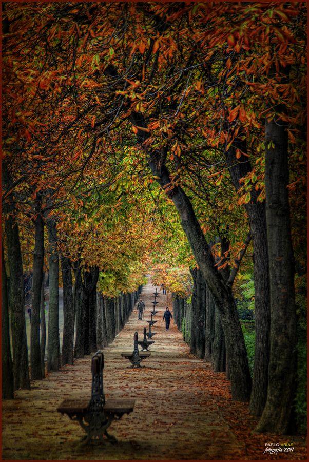 otoño en el parque del retiro, Madrid - de Pablo Arias