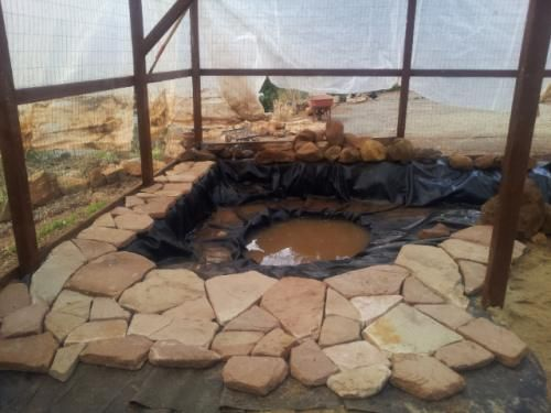 Diy Backyard Duck Pond :  Farm Fowl on Pinterest  Backyard chickens, Coops and Chicken feed