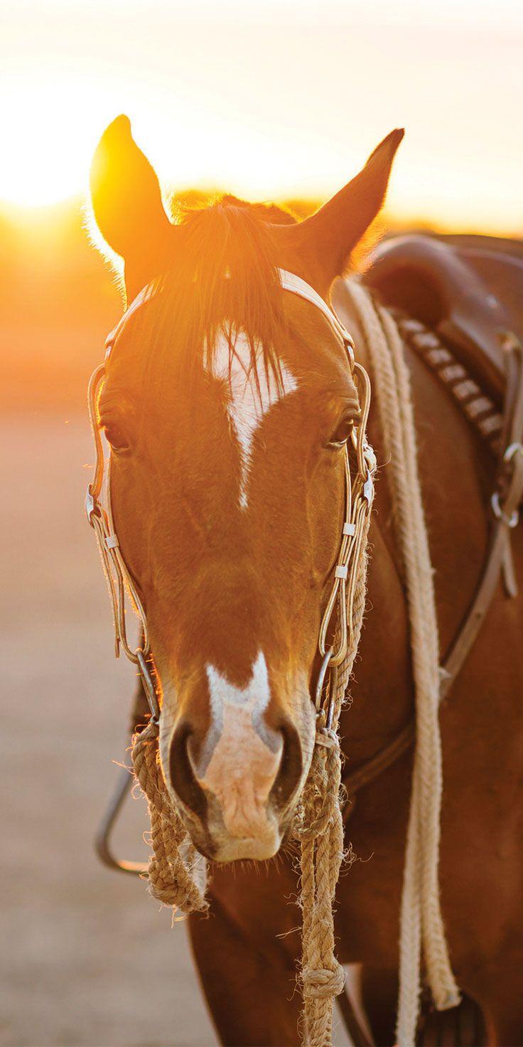 Meet Jube the horse, resting before sunset in Winton - by Lauren Bath & @visitqueensland