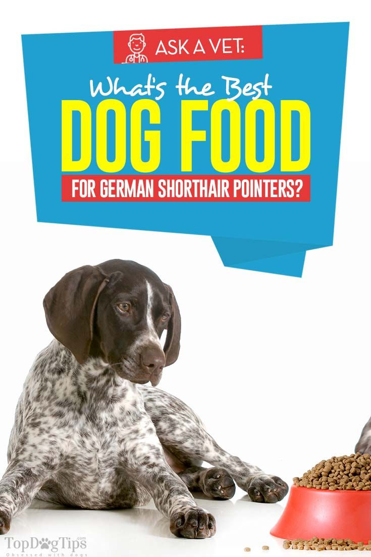 Best Dog Food For German Shorthair Pointers 7 Vet Recommended