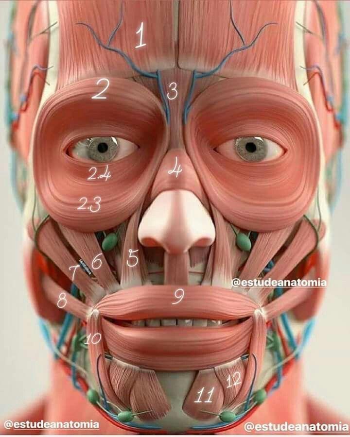 мышцы лица фото картинки человек идеальным зрением