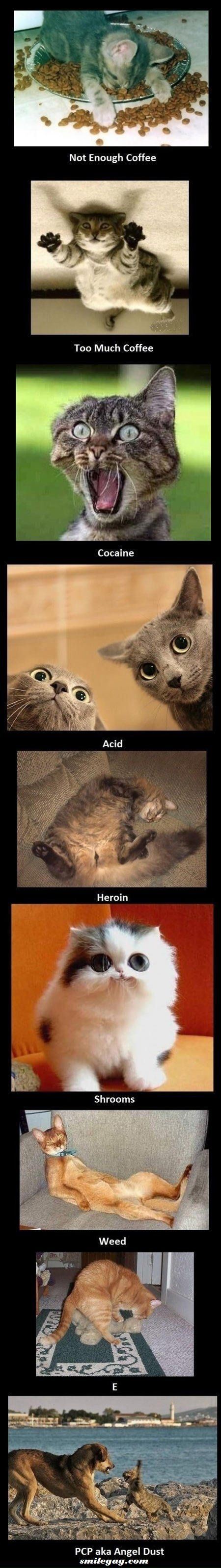 Cats on drugs! The second one is Kyle. For sure, definitely Kyle