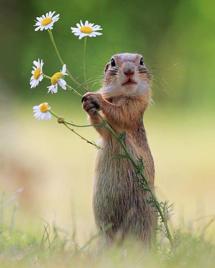 50 Adorably Whimsical Wildlife Photos Taken By Photographer