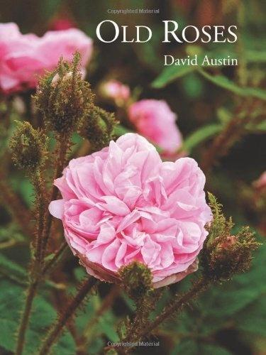 Old roses / anglais de David Austin, http://www.amazon.fr/dp/1870673697/ref=cm_sw_r_pi_dp_24aTrb1P8SENA