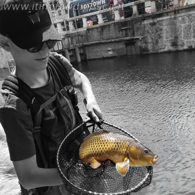 Pesca a mosca alla carpa nel naviglio a Milano pesca fishing