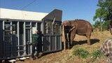 Fabricio Battaglini mostra o Santuário de Elefantes da Chapada dos Guimarães, Mato Grosso