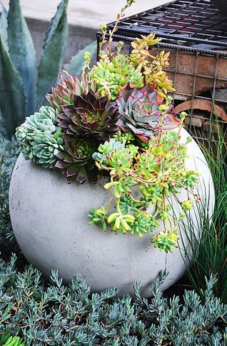 Concrete ball, used as planter in garden bed, planted with selection of brightly coloured succulents