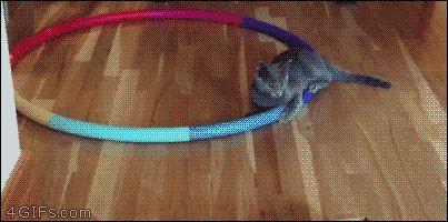 Hula hoop kitten. [video]