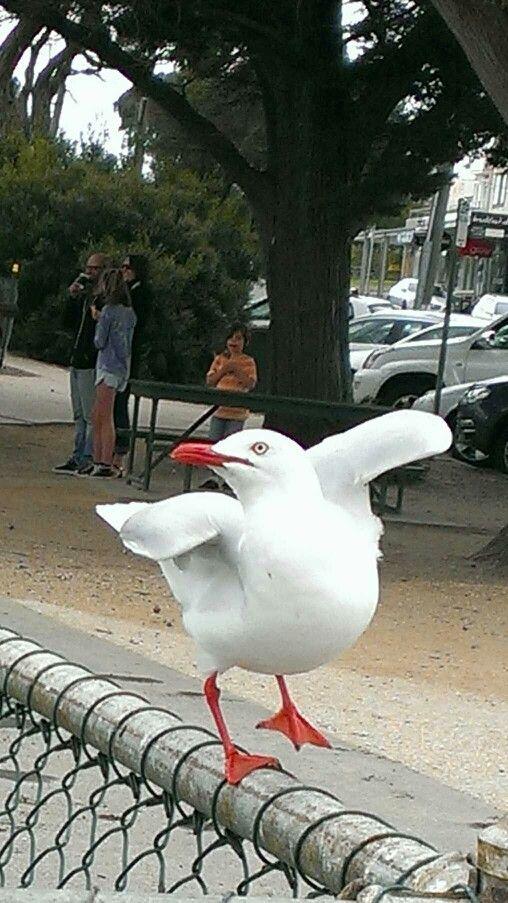 #DancingSeagull