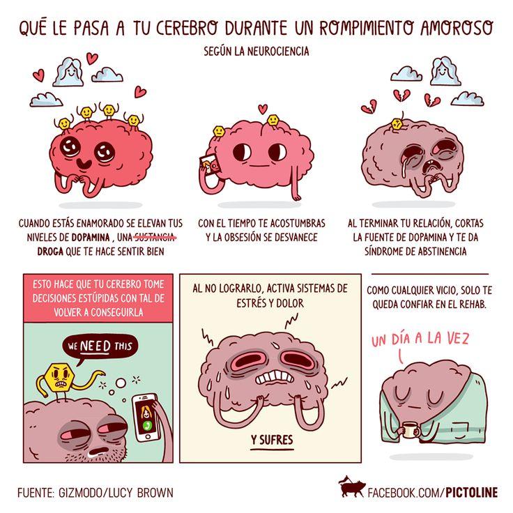 Pictoline | Qué le pasa a tu cerebro durante un rompimiento amoroso (según la neurociencia) [Ilustración - Infografía - Amor - Ciencia]