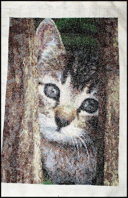 Hafciarka: Kotek przez płotek