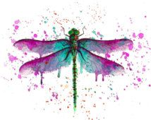 watercolor dragonfly - Google Search