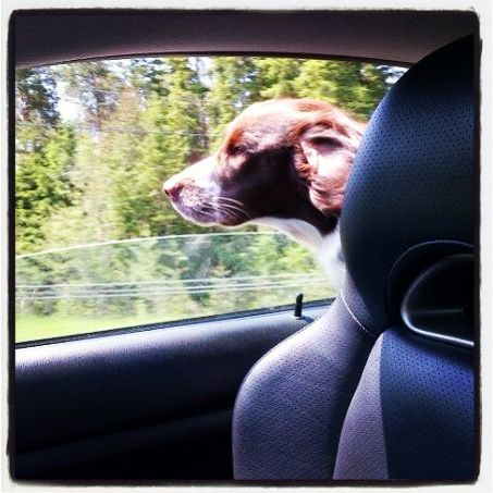 Road trip with Duncan