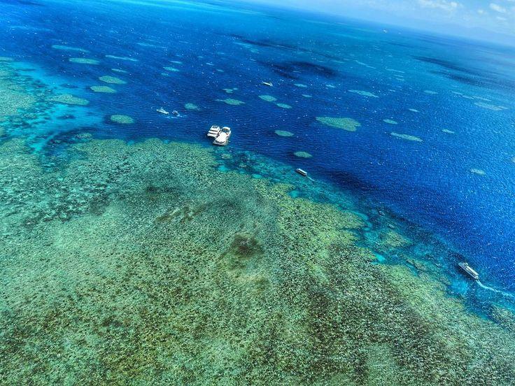 헬기에서 내려다본 산호초들 엄청나다 #greatbarrierreef #그레이트배리어리프 #산호 #helicopter #헬리콥터 #헬기 #옵션 #산호 #산호초 #엄청이뻐 #자연 #자련 #nature #sea #australia #cairns #바다스타그램 #바다다그램 #자연스타그램 by ja_ryun_ http://ift.tt/1UokkV2