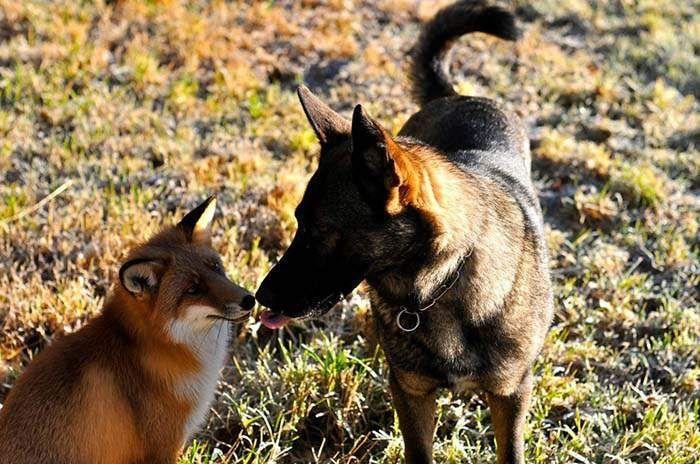 para-los-animales-no-existen-barreras-en-la-amistad-1 Amistad sin barreras