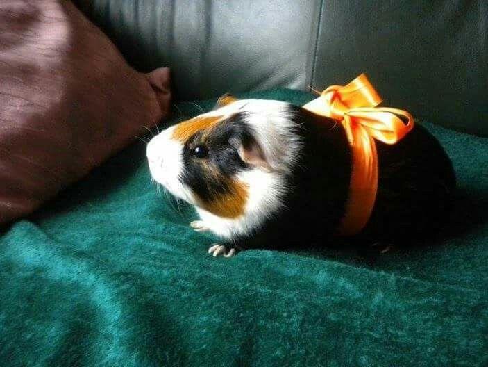 166 Best Images About Cute Piggys On Pinterest Teacup