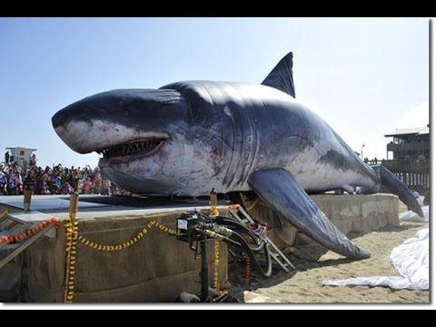 Megalodon Shark Documentary - New HD Documentary