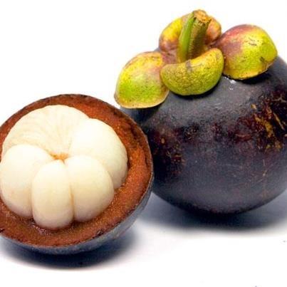"""El mangostino es un árbol tropical originario de Indonesia. El fruto es una cápsula carnosa redonda, con un diámetro entre 6 y 7 centímetros, la parte comestible es de color blanco, jugosa con un sabor exquisito.  El mangostino ha sido incluida dentro de las llamadas """"super frutas"""" debido a su gran poder, Antienvejecimiento, Antifatiga y energizante, Antiinflamatorio y Adelgazante"""