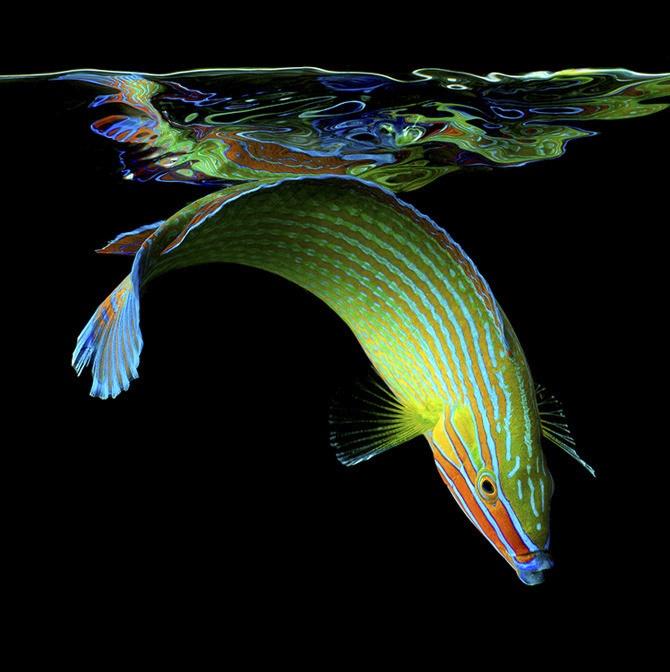 Exotic Sea Life Photography by Mark Laita