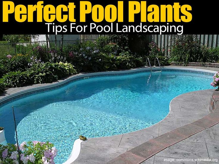 A pool can be a great addition to the landscape. Many pool owners want to