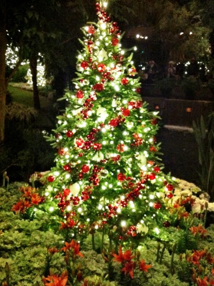 longwood gardens christmas lights are just breathtaking beautiful - Longwood Gardens Christmas Lights