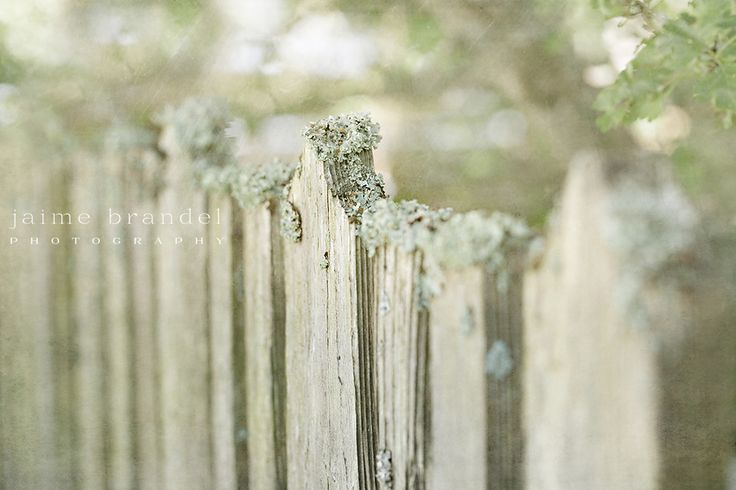 I'm always drawn to fences... especially old rickety ones, especially especially if they are covered in moss, and wooden, as though Mother Nature is taking her tree back.
