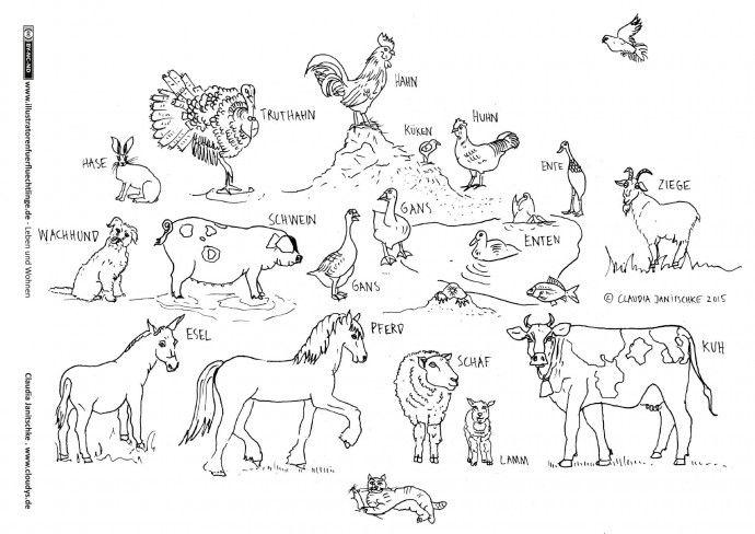 Leben Und Wohnen Tiere Nutztiere Haustiere Janitschke Nutztiere Haustiere Tiere
