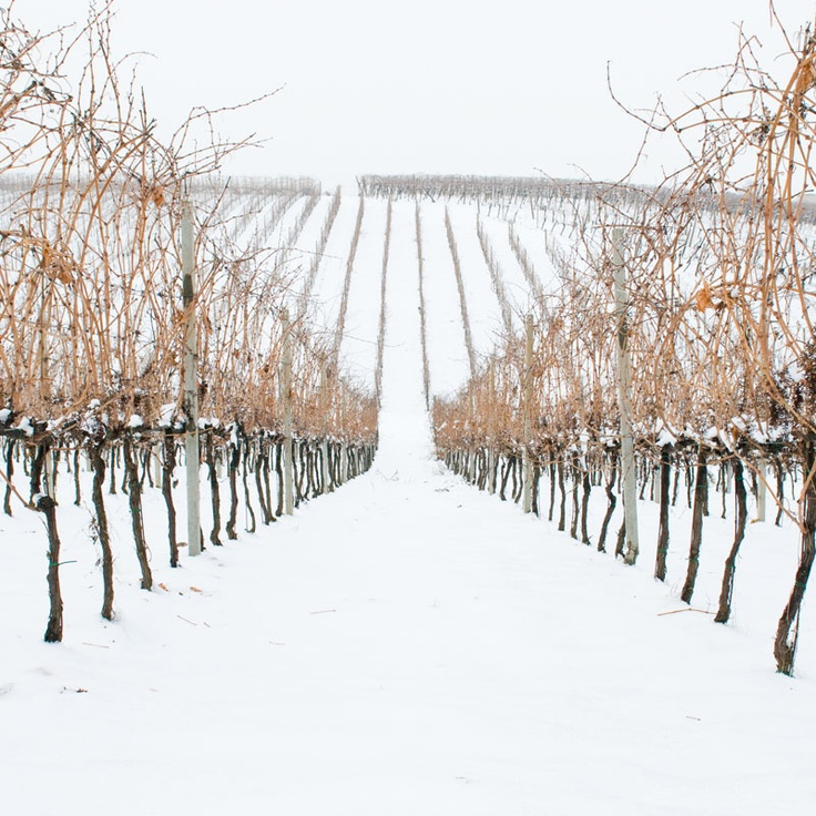 Snow on our #vineyards #umbertocesari #wine #sangiovese