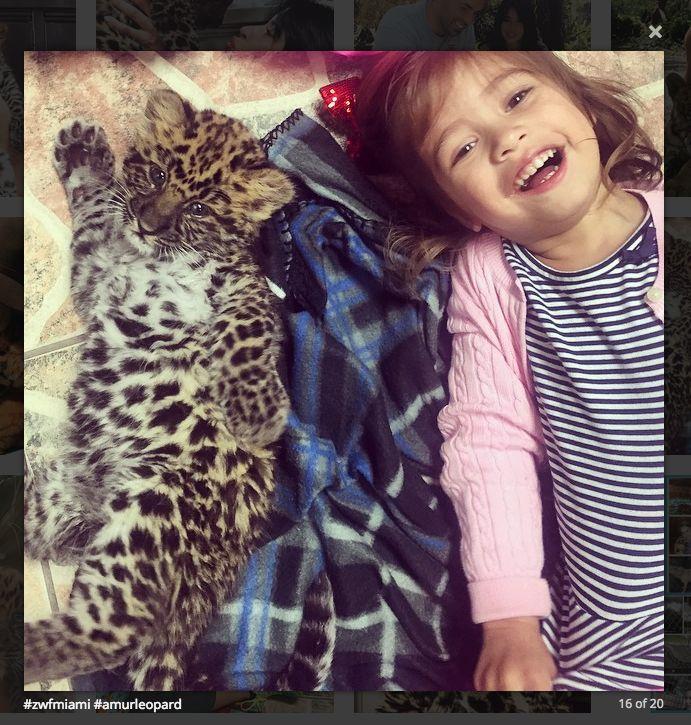 Zoological Wildlife Foundation ♡