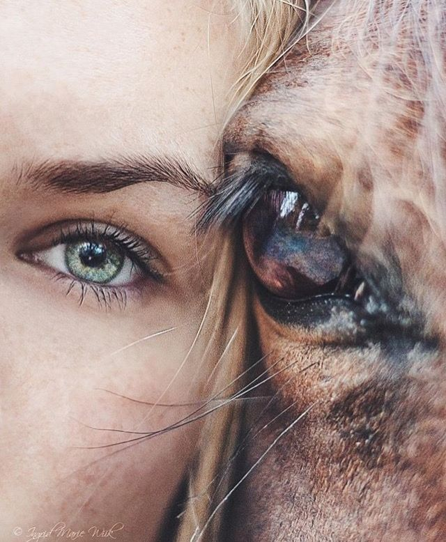 Horse and girl, eye to eye. A bond shown only through their eyes.
