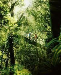 gold coast hinterland - rainforest trees