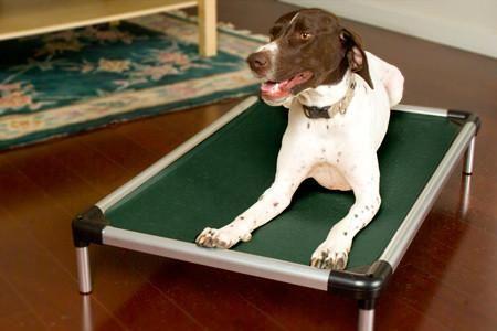 Cujo Raised Dog Cot - Aluminum