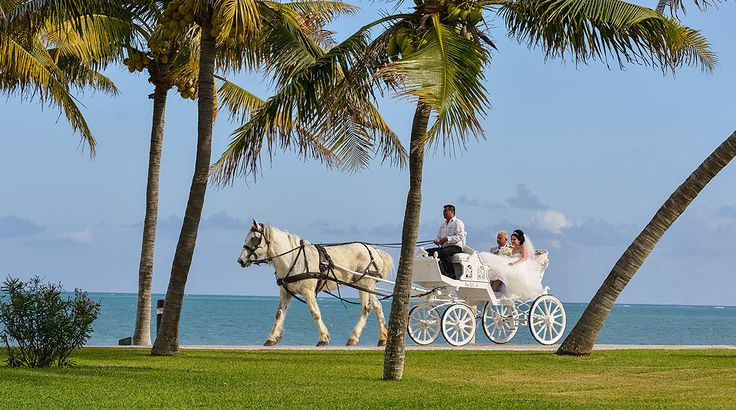 White horse and carriage for a fairytale wedding at Moon Palace Cancun in Mexico #destinationwedding