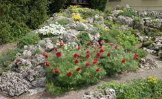 Mini-Alpen am Haus: Einen Steingarten anlegen - Ein Steingarten bietet auf kleinster Fläche eine enorme Farbenpracht – und blüht bei geschickter Pflanzenauswahl bis zum Herbst durch. Hier lesen Sie, wie Sie so ein Alpinum anlegen.